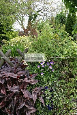 la phototh que les plus beaux jardins haie pyracantha. Black Bedroom Furniture Sets. Home Design Ideas