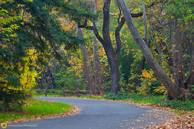 Fall colors in Bidwell Park #7