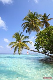 Tropical sea with palm trees and sail boat, Maldives
