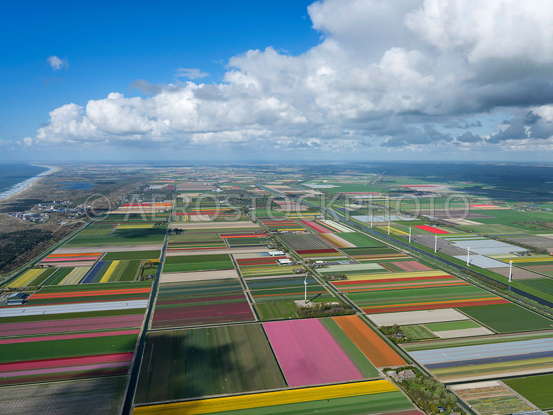the Netherlands aerial view