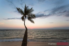 Palm tree and tropical beach at sunset, Costa Rica