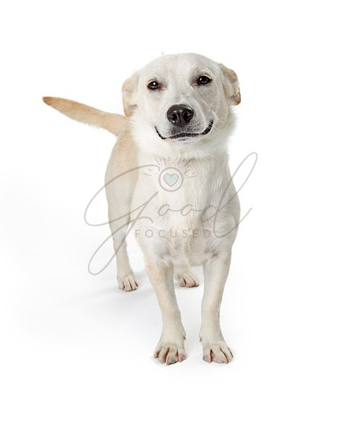 Funny Smiling Dog on White