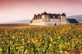 Vougeot castle and vineyards, Burgundy, France