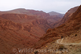 Walking the loop trail around Todra Gorge,  High Atlas, Morocco, Landscape