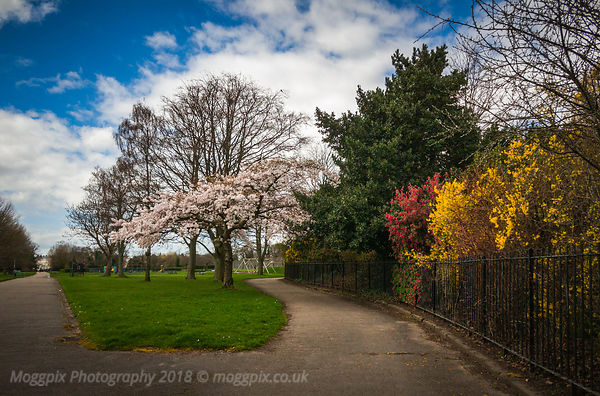 Spring Blossom in Princes Park