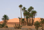 Oasis and dunes