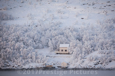 Small house surrounded by Snow Laden Trees