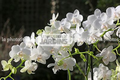 La Phototheque Les Plus Beaux Jardins Plantes D Interieur Le
