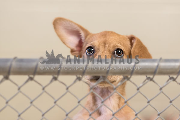 Animal Shelter and Pet Rescue photos