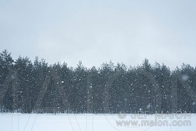 Forest by snowstorm