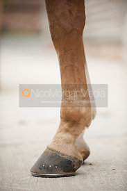 a horse's front legs