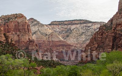 Zion_National_Park-Zion_NP_-92April_19_2018NAT_WHITE-April_19_2018-NAT_WHITE