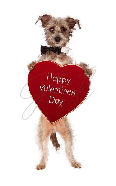 Terrier Dog Holding Happy Valentines Day Heart