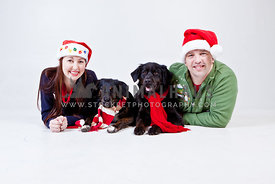 Happy Christmas couple with dogs