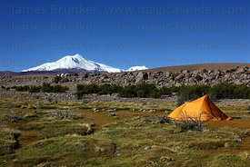 Camp on high altiplano , Guallatiri volcano in background , Las Vicuñas National Reserve , Region XV , Chile