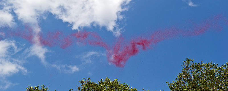 Lancaster bomber poppy drop