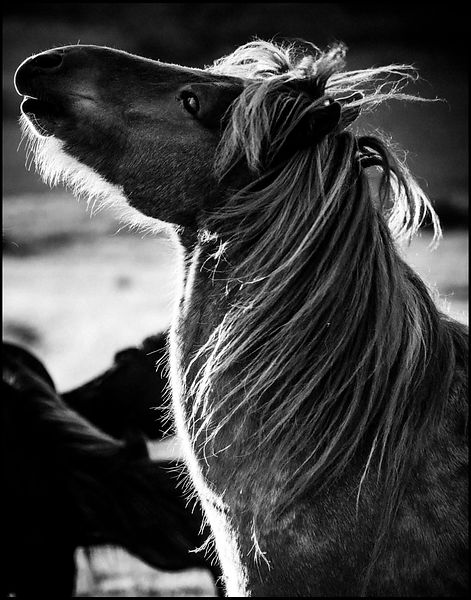 Wild horse looking at the stars, Iceland 2015 © Laurent Baheux