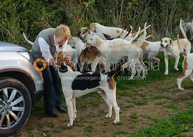 A follower is greeted by the Cottesmore hounds.