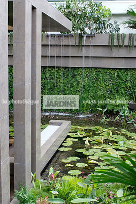 Contemporary garden, Exotic garden, Garden construction, Tropical garden, Water garden, Foliage wall, Green wall, Vegetation wall, water lily, Waterlily