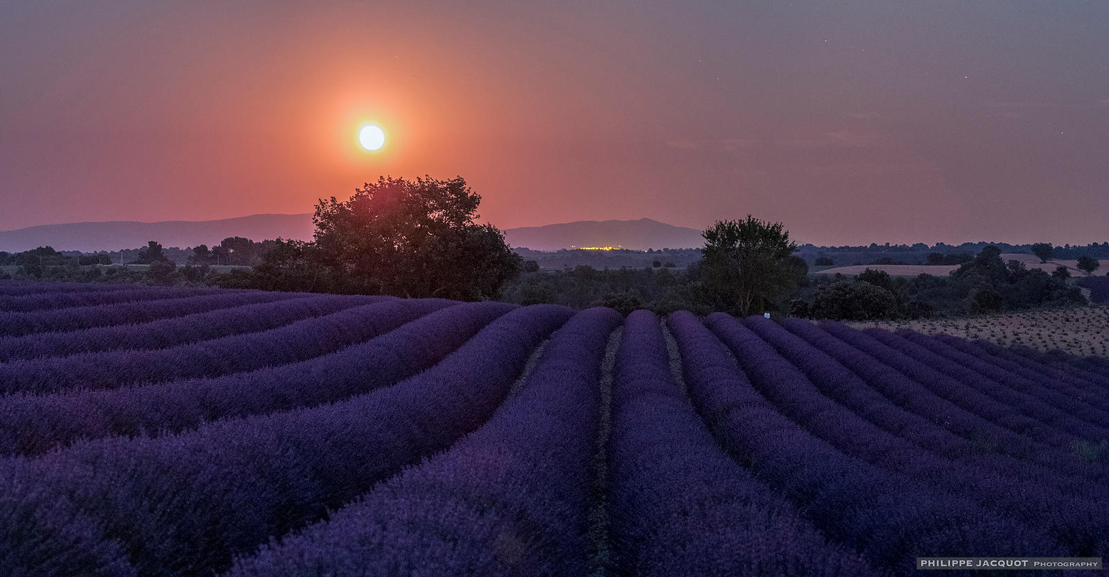 Moonrise over lavender field - Valensole - Alpes Haute Provence