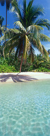 beach scene with palm trees and white sandy koh mak beach thailand Asia