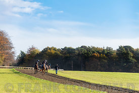 NEWMARKET, ENGLAND - NOVEMBER 10, 2018: Racehorses with their trainer after exercise on the Warren Hill racehorse training gallops at Newmarket, England.