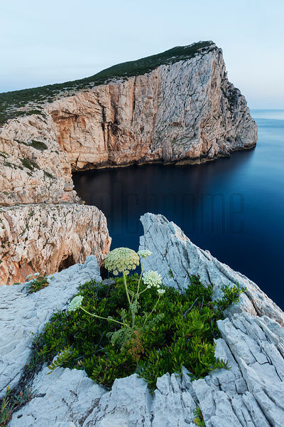 The White Cliffs at Capo Caccia at Sunset