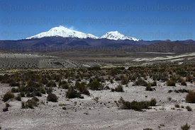 Desert scenery in River Lauca valley and volcanos , Las Vicuñas National Reserve , Region XV , Chile