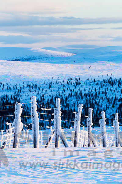 Reindeer fence in Urho Kekkonen National Park