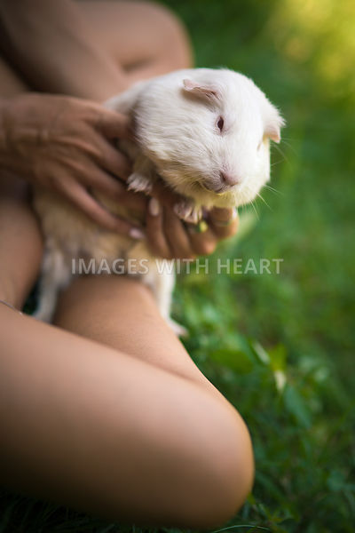 Guinea pig held by a girl - Portrait format