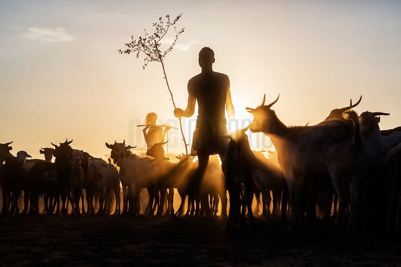 Kara Herders at Dawn