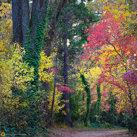 Fall Colors in Bidwell Park, Chico #11