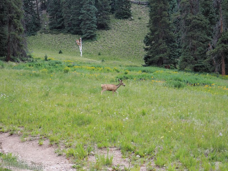 A deer kept roaming around our tents. People must have fed him there before