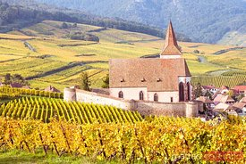 Vineyard and church in autumn, Hunawihr, Alsace, France
