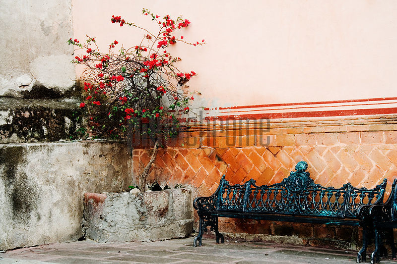 Wrought iron bench and bougainvillea