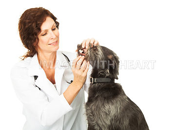Veterinarian Examining Dental Health On Dog