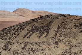 Geoglyph of llama / camelid in Azapa Valley , Region XV , Chile