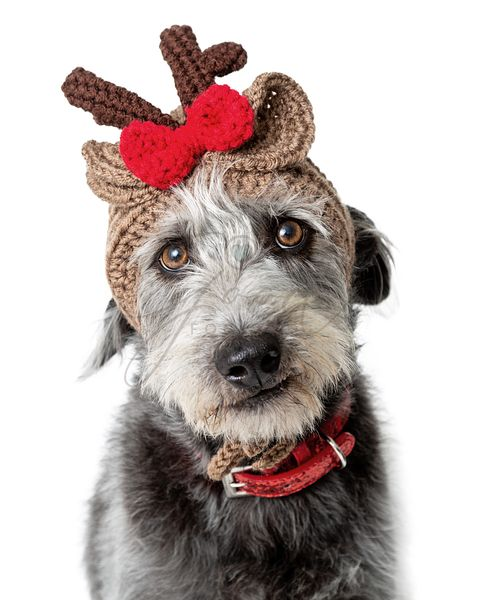 Funny Dog Wearing Christmas Reindeer Knitted Hat