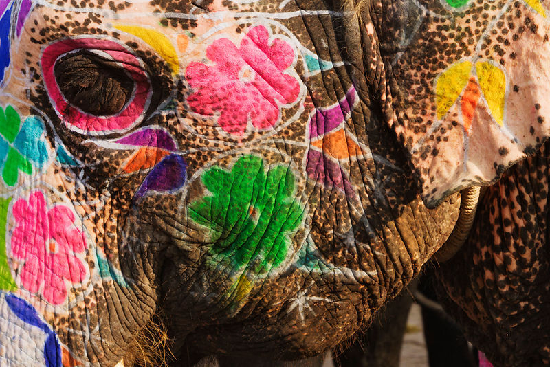 Decorated Elephant