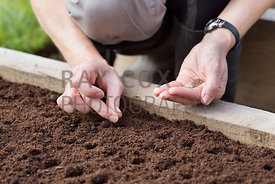 Hand-sowing turnip seeds