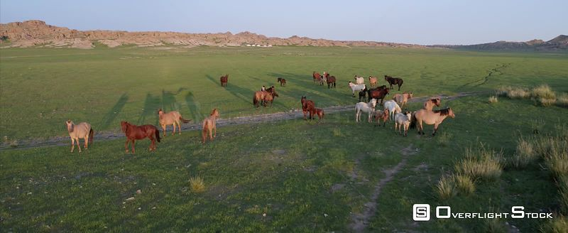 Livestock Animals Drone Video Mongolia