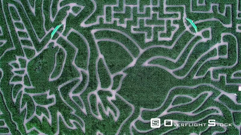 Aerial view zooming in of Milton Maize Maize, Cambridge filmed by drone in summer, United Kingdom