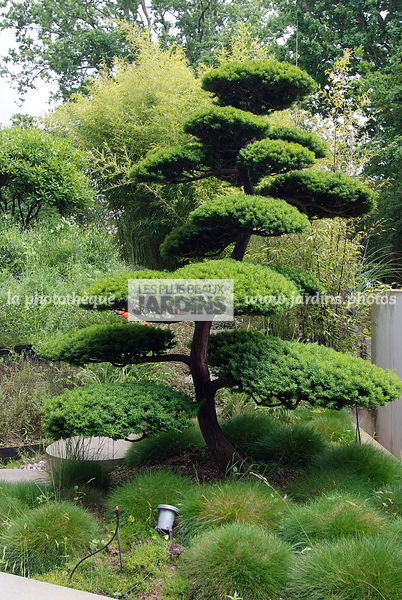 la phototh que les plus beaux jardins taxus baccata if baies arbre nuage paysagiste. Black Bedroom Furniture Sets. Home Design Ideas