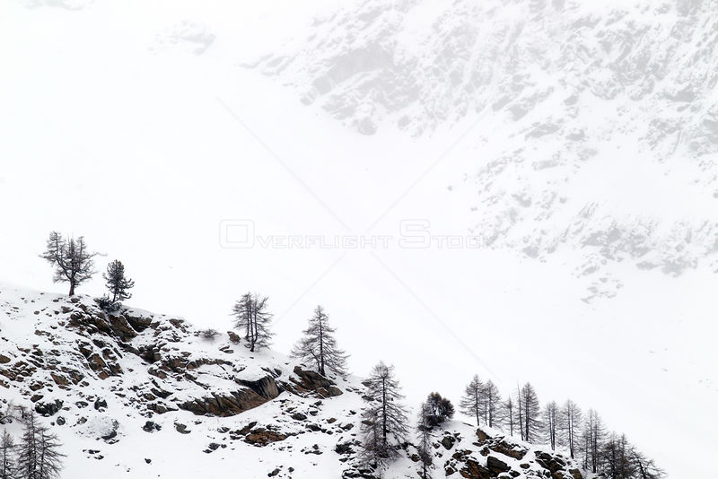 Snow covered mountain slopes with pine trees in Gran Paradiso National Park, Italy, December 2011
