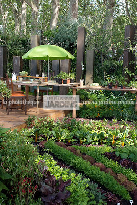 Potager biologique. Rang de salade : Lactuca sativa 'Amorina'; Lactuca sativa 'Fristina'; Lactuca sativa 'Red Fire'; Lactuca sativa 'Venziana'. Coin repas : table, chaise, parasol. Designer : Paul Stone. Chelsea FS, Angleterre