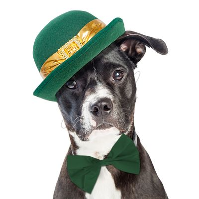 Cute St Patricks Day Dog Closeup