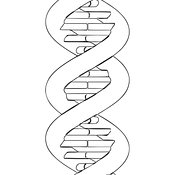 DNA #11 Outline