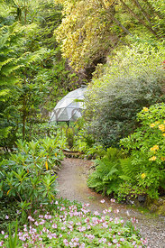 Hardy geraniums, Azalea luteum and ferns by geodesic dome fernery