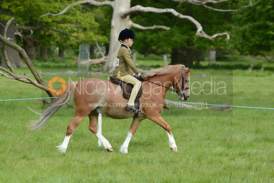 Class 19 - BSPS RIHS Heritage M&M Open First Ridden photos