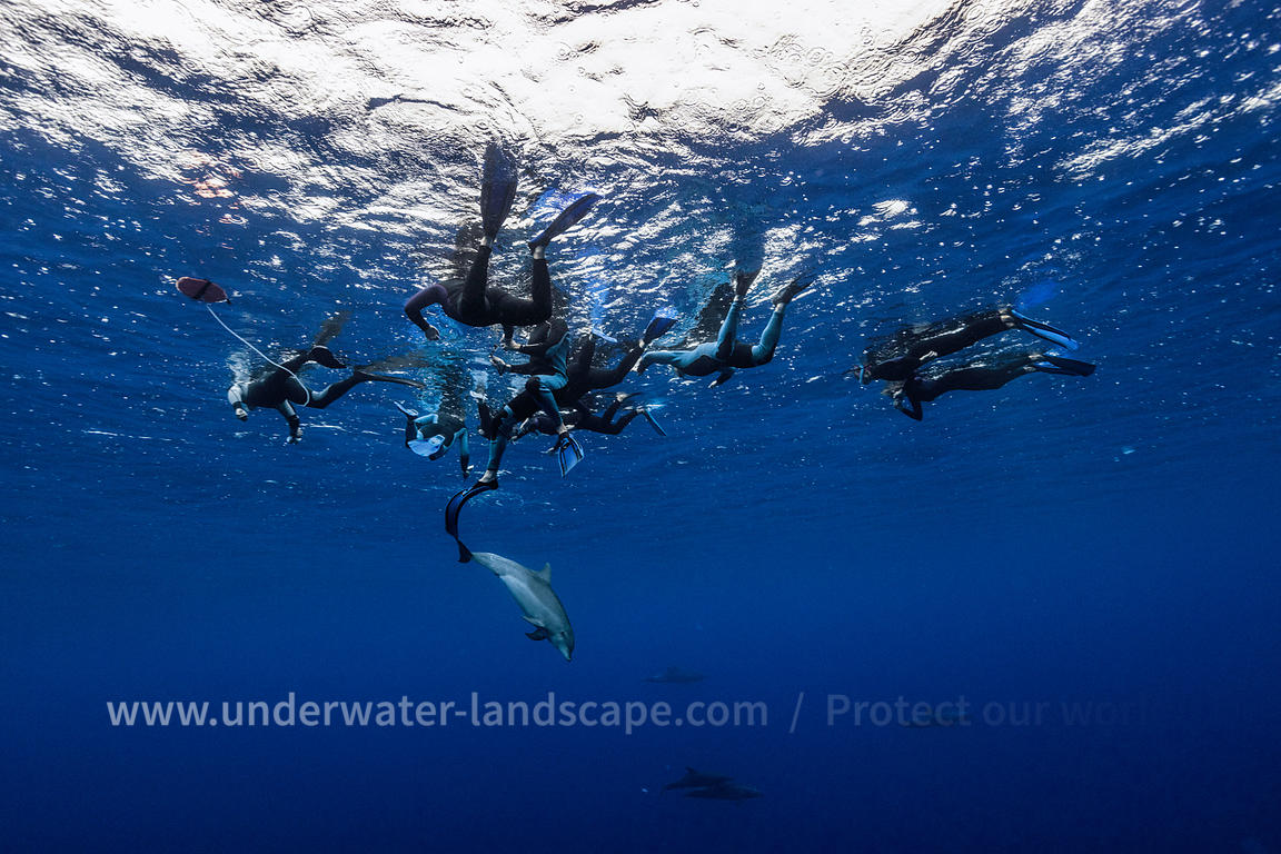 Underwater photographer diver with dolphins picture